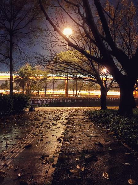 深夜腾讯大厦-春雨叶落似深秋